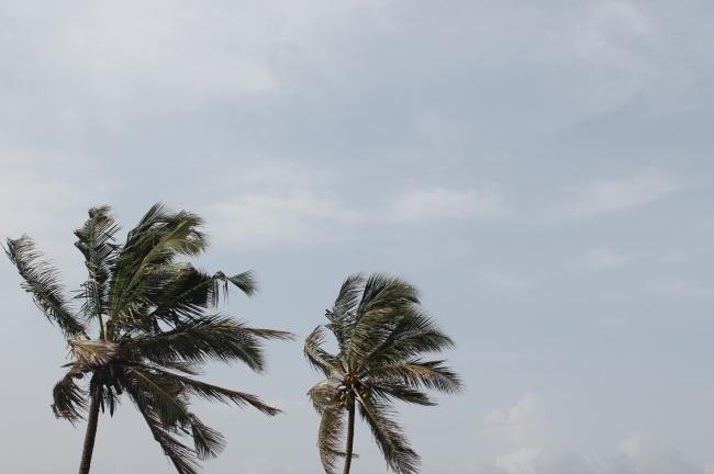 Amazing morning Breeze,..Swaying coco trees:)