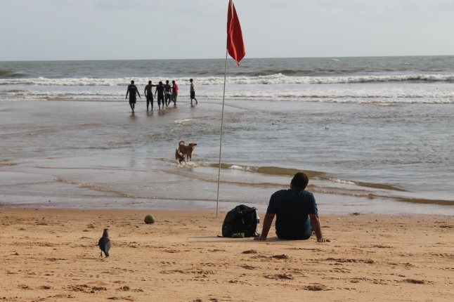 Dogs ,Crows ,& HUmans ..ALl @Baga Beach;) ;)