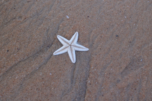 Lovey Starfishes..In Ample @ Candolim!!