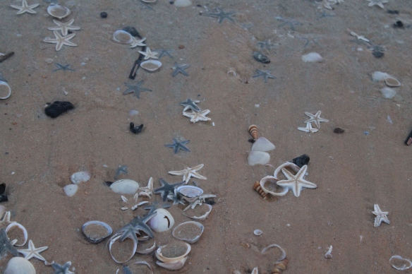 Shells & Star Fishes!!
