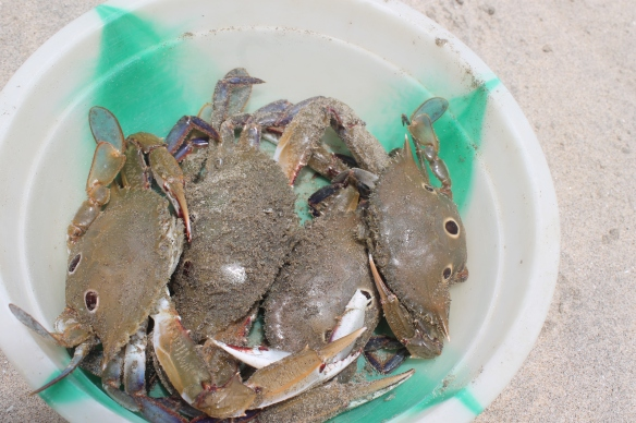 Basket full of 5 CRABS:) Direct from sea..yohooo