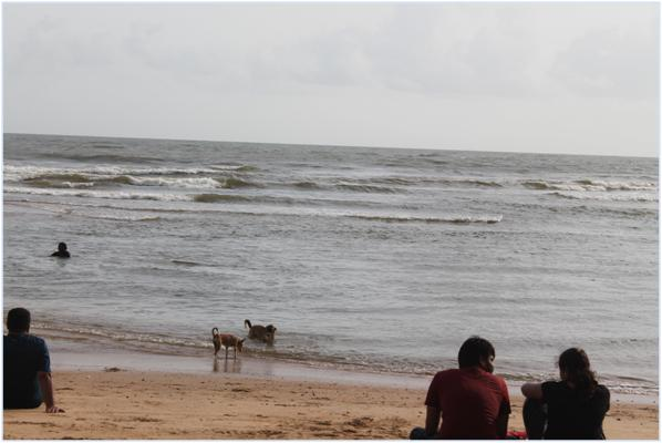 Can Goa be a thrill in Monsoon? Yes, read out our Travel tales of Goa with the toddler yet to hit their first birthdays. #Goa #Travel #traveltales #familytravel #Indiagram #traveller #bagabeach