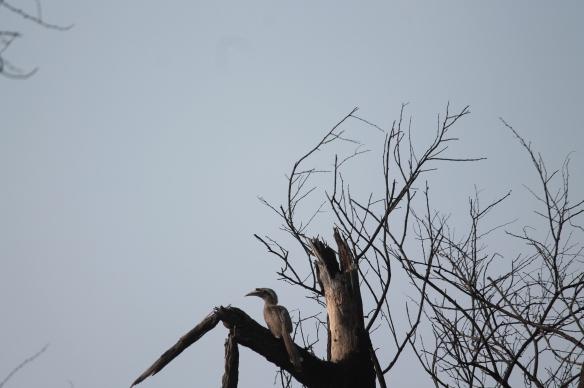 Bharatpur Nature Park